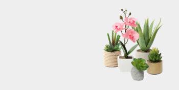 Kunstpflanzen